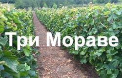 Tri Morave